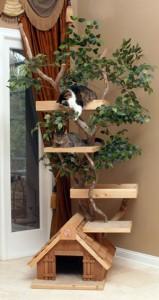 Casa-pet-gatos