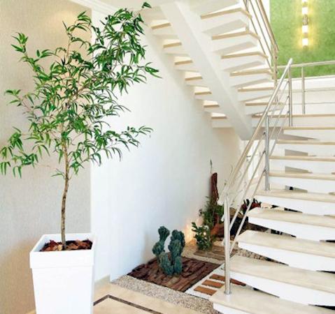 Como ter plantas grandes dentro de casa - Plantas de interior grandes ...