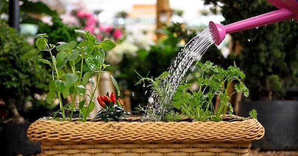 plantas-dentro-de-casa (2)