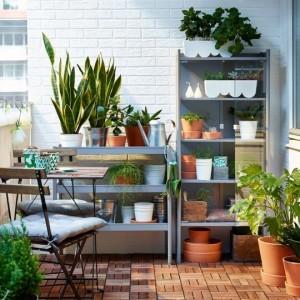plantas-dentro-de-casa (1)