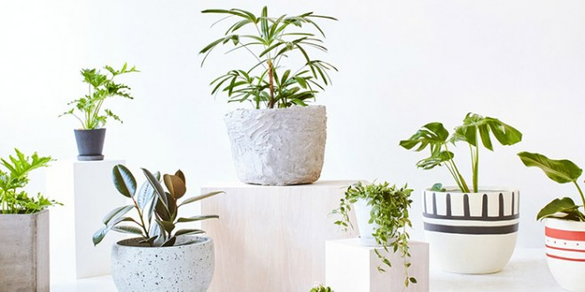 3 dicas b sicas para cultivar plantas dentro de casa - Cultivar plantas aromaticas en casa ...