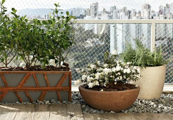 plantas-dentro-de-casa (4)