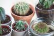 Aprenda a cuidar dos cactos e traga mais verde para sua casa