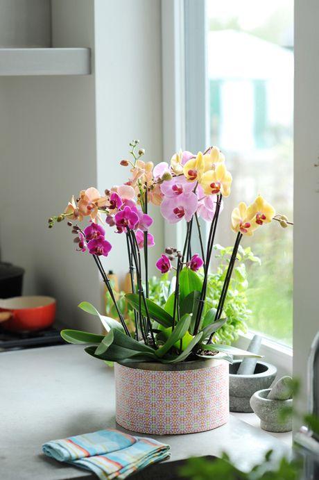 plantar-orquídeas (12)