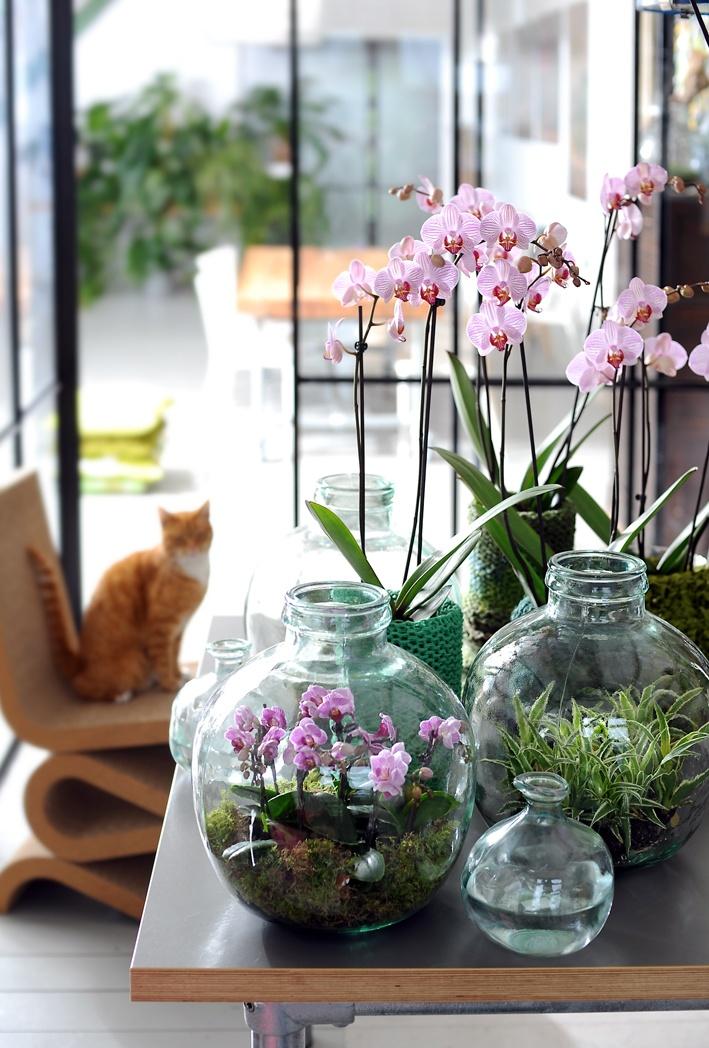 plantar- orquídeas (2)