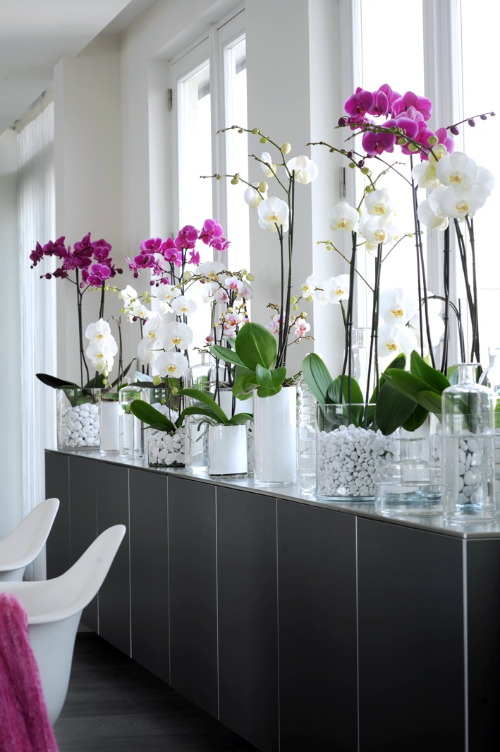 aprenda os truques para ter orqu deas lindas e floridas em casa. Black Bedroom Furniture Sets. Home Design Ideas
