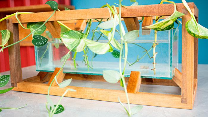 vaso-para-plantas-aquaticas